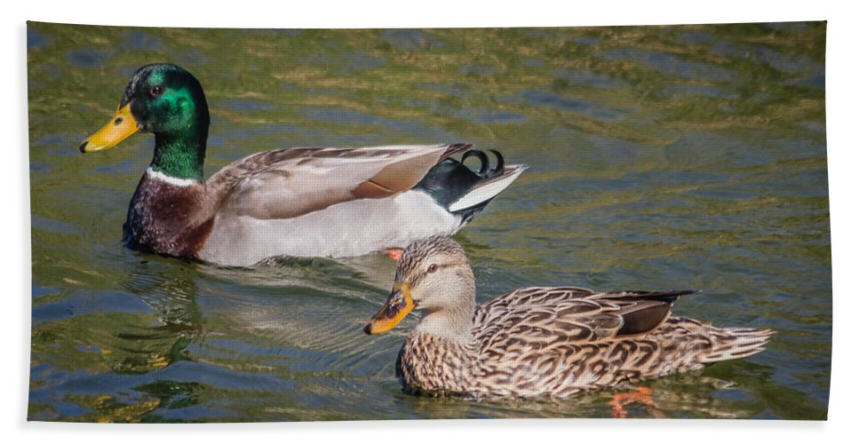 Florida Hand Towel featuring the photograph Mallard Pair by Jane Luxton