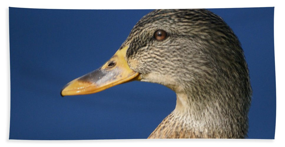 American Widgeon Hand Towel featuring the photograph Mallard Queen by Heather Coen