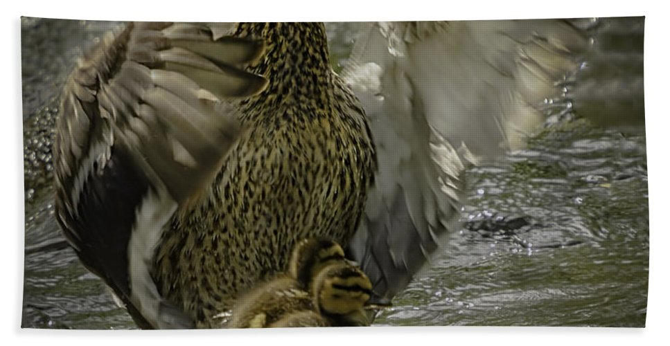 Mama Bath Sheet featuring the photograph Mama Duck Protecting Her Babies by LeeAnn McLaneGoetz McLaneGoetzStudioLLCcom
