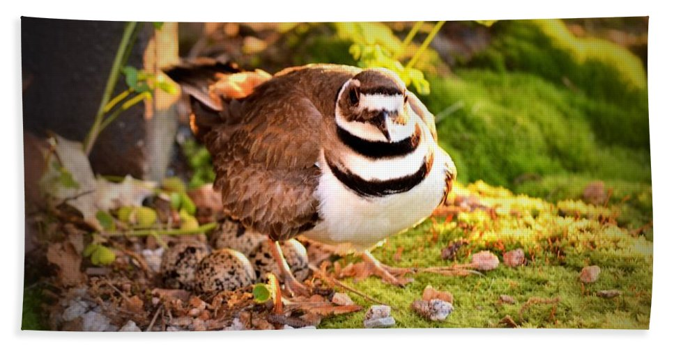 Killdeer Bath Sheet featuring the photograph Mama Protecting Eggs by Tara Potts