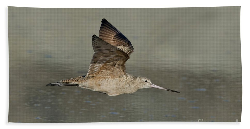 Marbled Godwit Hand Towel featuring the photograph Marbled Godwit by Anthony Mercieca
