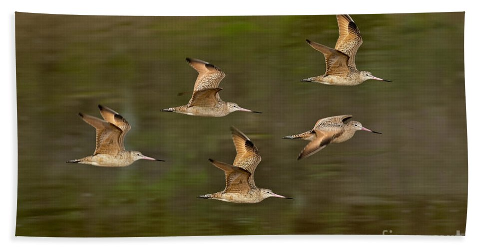 Marbled Godwit Hand Towel featuring the photograph Marbled Godwit Flock Flying by Anthony Mercieca