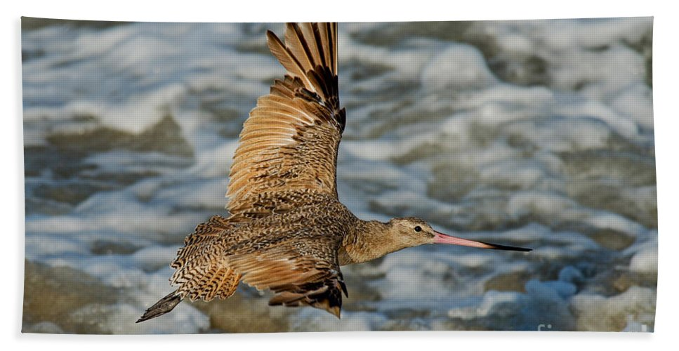 Marbled Godwit Hand Towel featuring the photograph Marbled Godwit Flying Over Surf by Anthony Mercieca