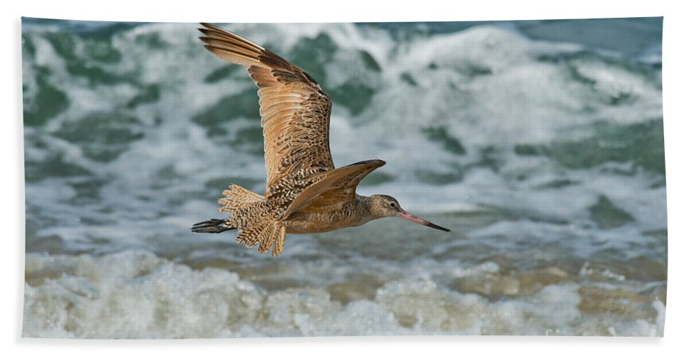 Marbled Godwit Hand Towel featuring the photograph Marbled Godwit Over Surf by Anthony Mercieca