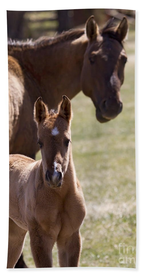 Horse Bath Sheet featuring the photograph Mare And Foal  #0659 by J L Woody Wooden