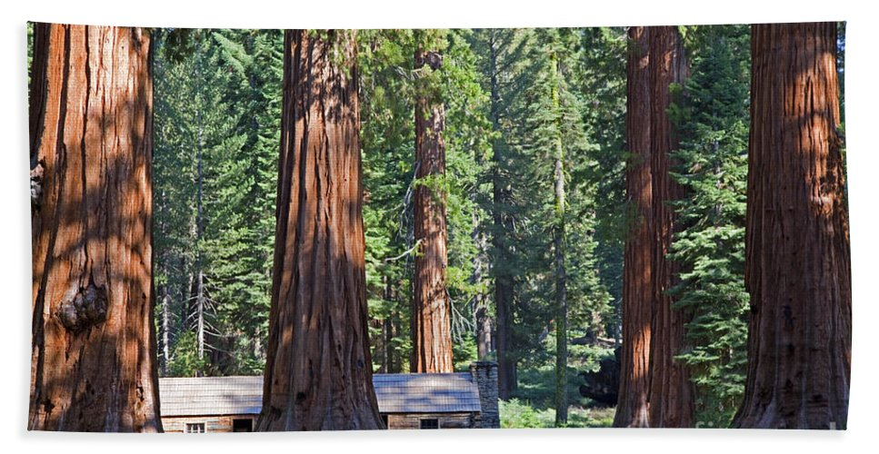 Sequoias Bath Sheet featuring the photograph Giant Sequoias Mariposa Grove by John Stephens