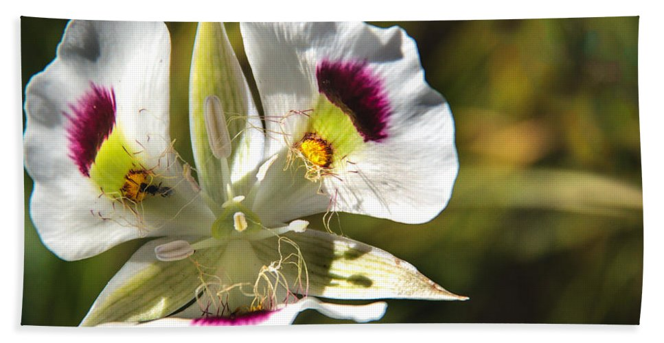Wild Flowers Hand Towel featuring the photograph Mariposa Lily by Robert Bales