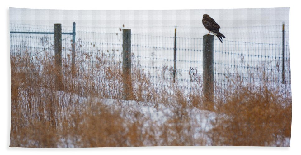 Bloomfield Hand Towel featuring the photograph Marsh Hawk by Tracy Winter