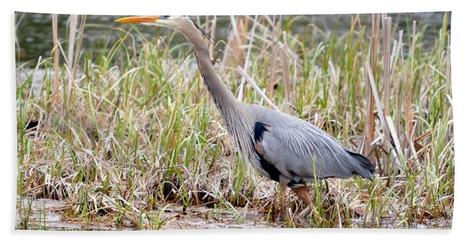 Great Blue Heron Bath Sheet featuring the photograph Marsh Hunter by Thomas Phillips