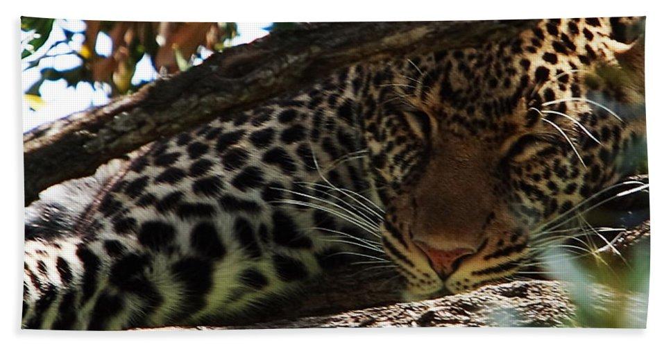 Leopard Hand Towel featuring the photograph Masai Mara Leopard by Aidan Moran