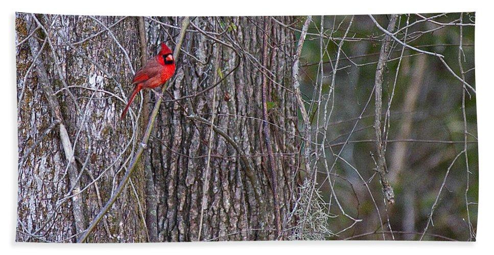 Sw Georgia Cardinal Bird Vines Bath Sheet featuring the photograph Master Of His Domain by Dan Wells
