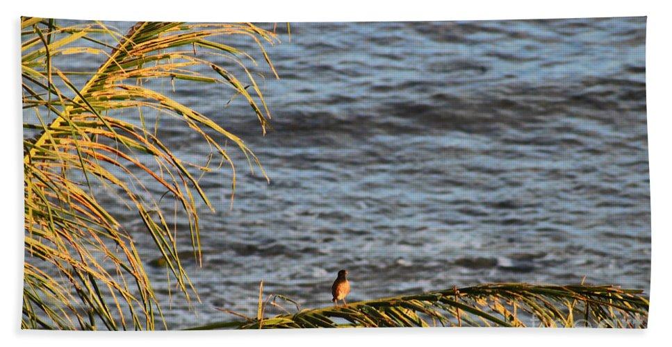 Bird Hand Towel featuring the photograph Maui Sun Setting by Andrea Goodrich