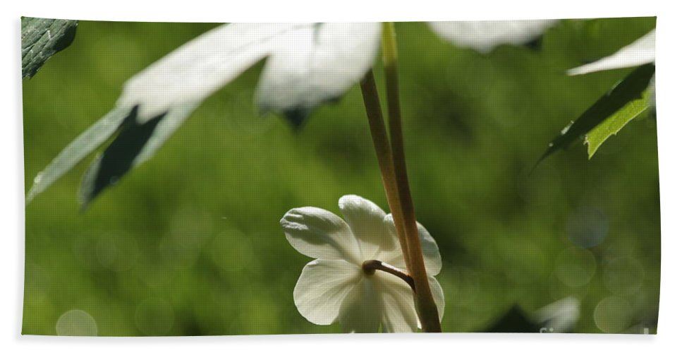 May Bath Sheet featuring the photograph May Apple Flower by Kenny Glotfelty