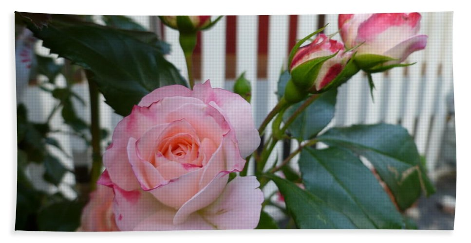 Flower Macro Hand Towel featuring the photograph Mayberry Sunshine by Lingfai Leung
