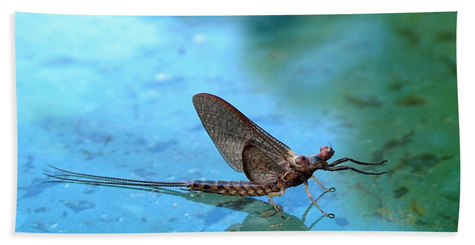 Mayfly Hand Towel featuring the photograph Mayfly Reflected by Thomas Young