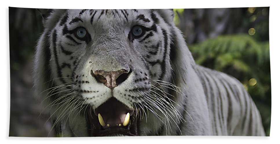 Tigers Hand Towel featuring the photograph Me by Ken Frischkorn