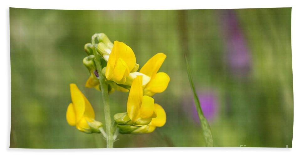Bulgaria Bath Sheet featuring the photograph Meadow Vetchling Wild Flower by Jivko Nakev