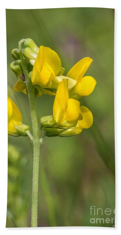 Bulgaria Bath Sheet featuring the photograph Meadow Vetchling Yellow Flower by Jivko Nakev