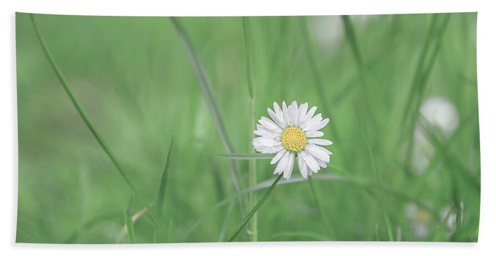 Flower Bath Sheet featuring the photograph Meadows Of Heaven by Evelina Kremsdorf