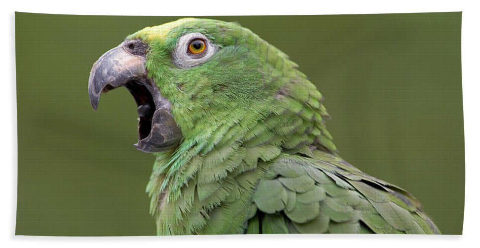00762511 Bath Towel featuring the photograph Mealy Parrot Amazona Farinosa Calling by Ingo Arndt