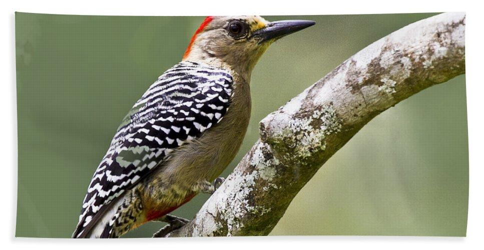 Woodpecker Bath Sheet featuring the photograph Melanerpes Rubricapillus - Dp by Heiko Koehrer-Wagner