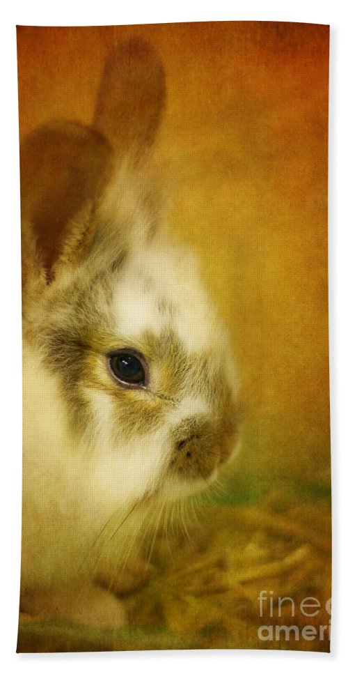 Rabbit Hand Towel featuring the photograph Memories Of Watership Down by Lois Bryan