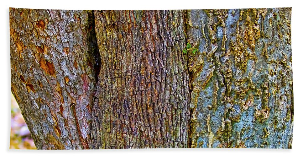 Bark Hand Towel featuring the photograph Menage A Tree by Gary Holmes