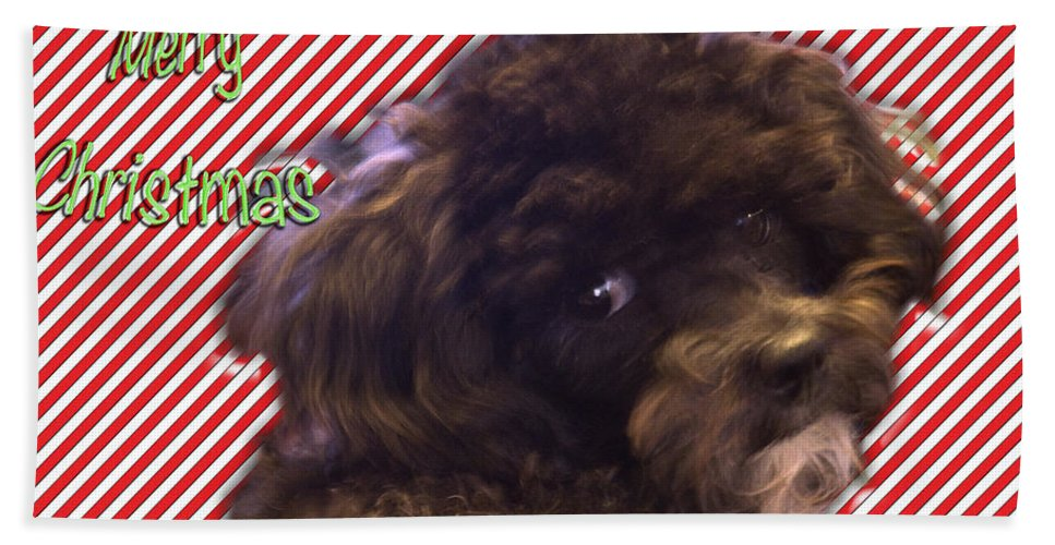 Poodle Bath Sheet featuring the photograph Merry Christmas by Terry Anderson