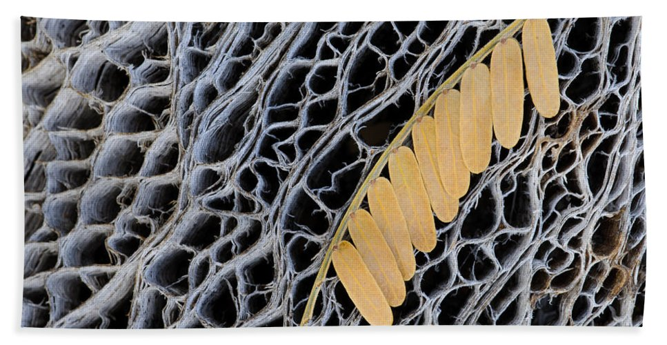 Nature Bath Sheet featuring the photograph Mesquite Leaves by John Shaw