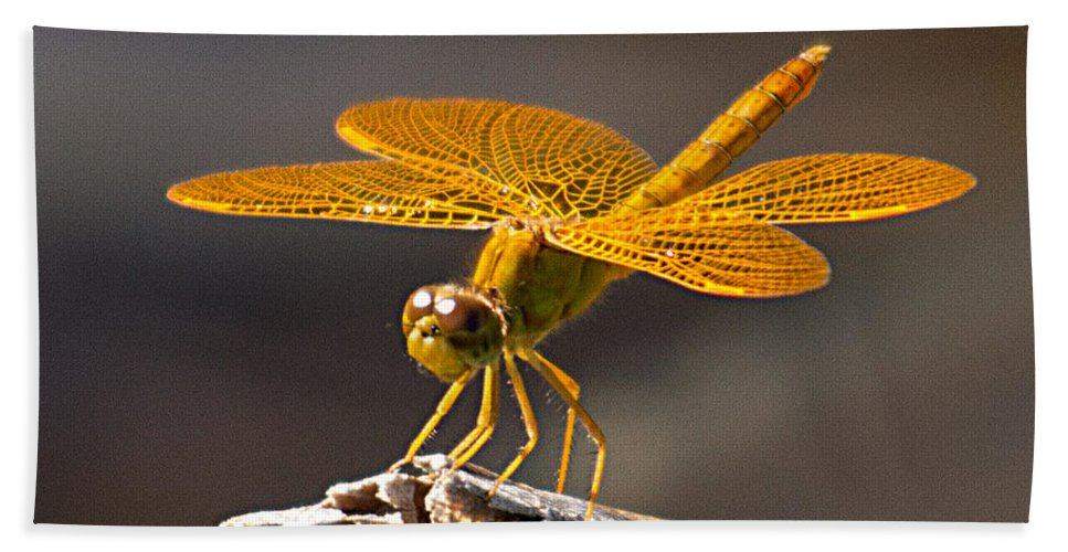 Nature Hand Towel featuring the photograph Mexican Amberwing by David Salter