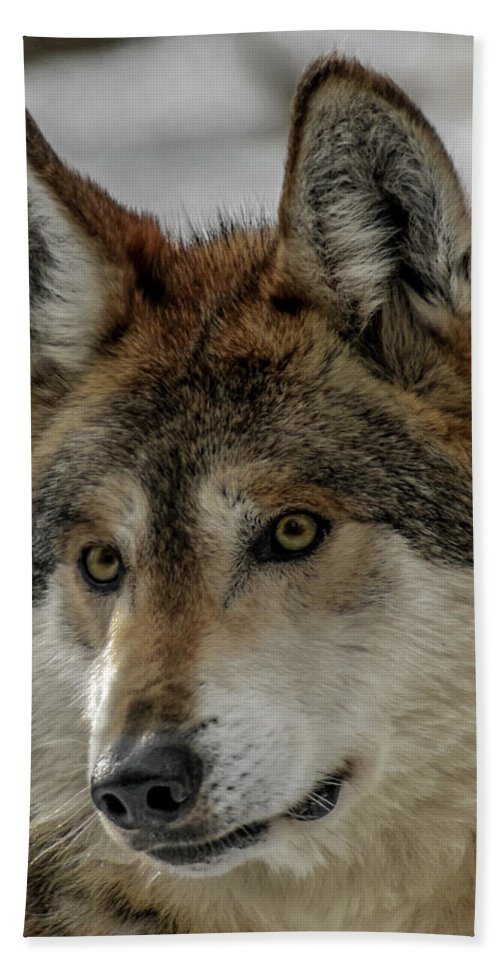 Wolf Hand Towel featuring the photograph Mexican Grey Wolf Upclose by Ernie Echols