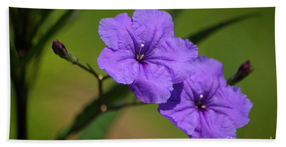 Petunia Bath Sheet featuring the photograph Mexican Petunia by Living Color Photography Lorraine Lynch