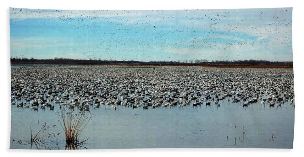Hand Towel featuring the photograph Migrating Geese by Kim Blaylock