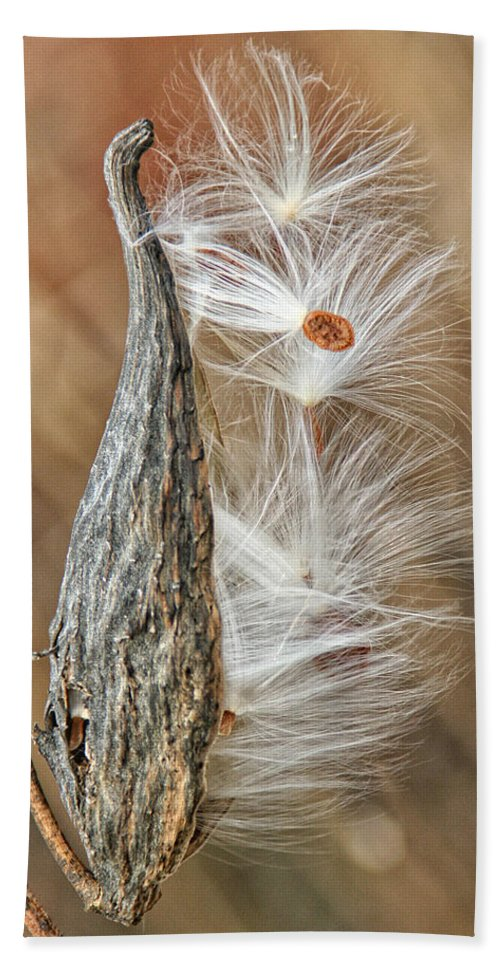 Nature Bath Sheet featuring the photograph Milkweed Pod And Seeds by William Selander