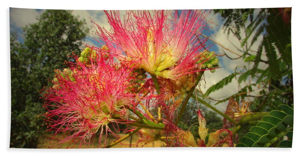 Mimosa Bath Sheet featuring the photograph Mimosa Blossoms by Joyce Dickens