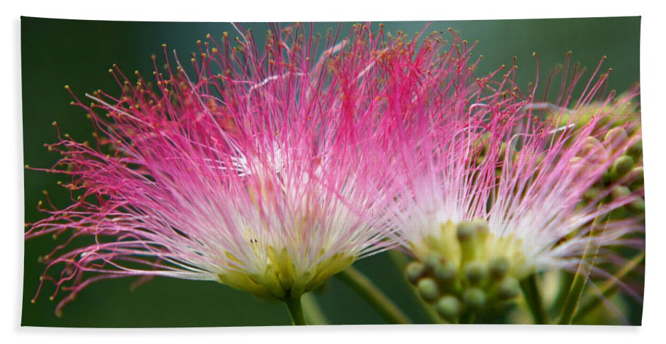 The Mimosa Hand Towel featuring the photograph Mimosa by Kim Pate
