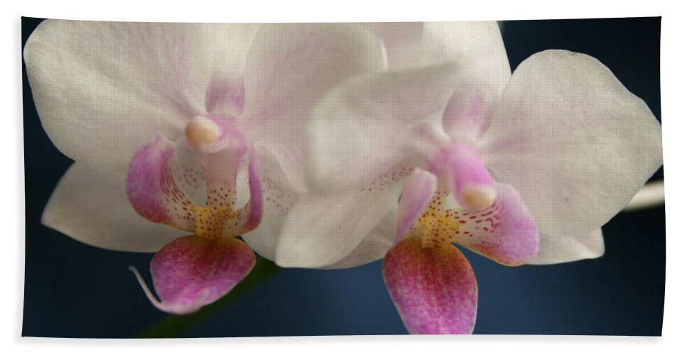 Mini Phalaenopsis Bath Sheet featuring the photograph Mini Orchids 2 by Marna Edwards Flavell
