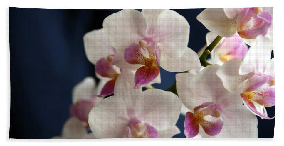 Mini Phalaenopsis Bath Sheet featuring the photograph Mini Orchids 3 by Marna Edwards Flavell