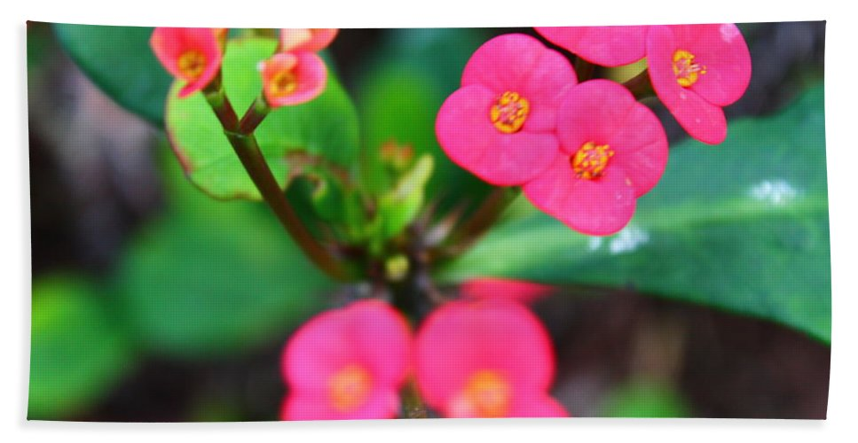 Mini Pink Flowers Hand Towel featuring the photograph Mini Pinks by Catie Canetti