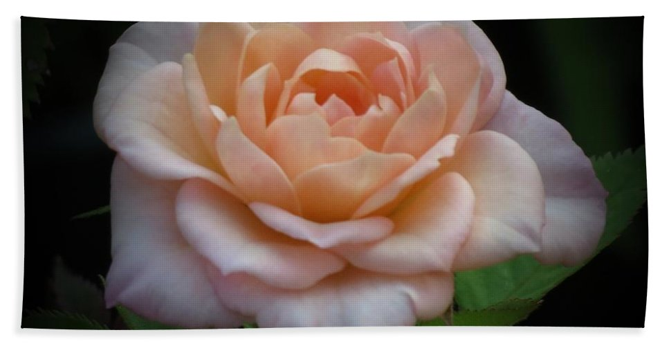 Peachy Pink Rose Hand Towel featuring the photograph Mini Rose by MTBobbins Photography