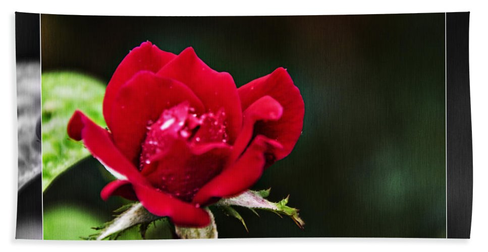 Red Rose Hand Towel featuring the photograph Mist Of Love by Walter Herrit