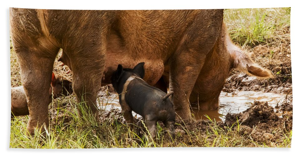 Pig Farm Williamson County Texas Pigs Farms Sow Sows Animal Animals Creature Creatures Piglet Piglets Hand Towel featuring the photograph M'm Good by Bob Phillips
