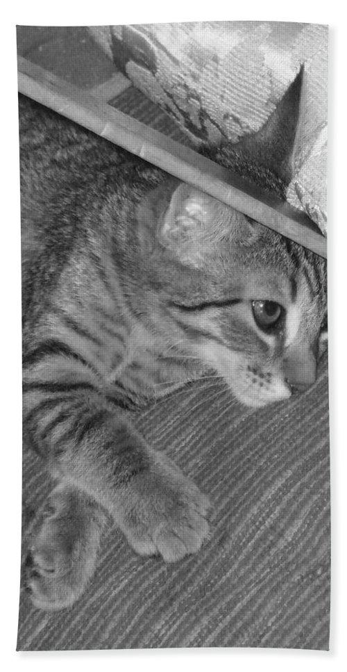 Kitten Hand Towel featuring the photograph Model Kitten by Pharris Art