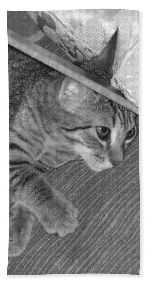 Kitten Bath Towel featuring the photograph Model Kitten by Pharris Art