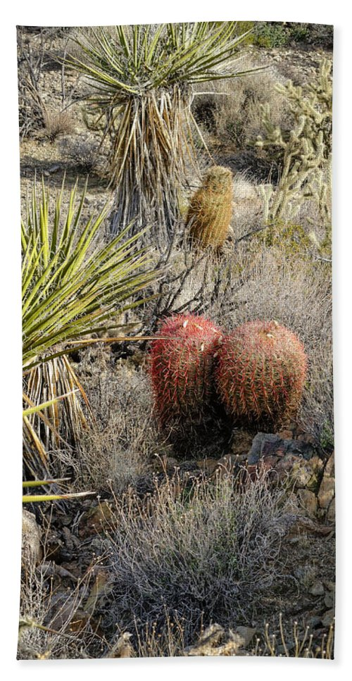 Cactus Bath Sheet featuring the photograph Mojave Desert Cactus by Jim Thompson