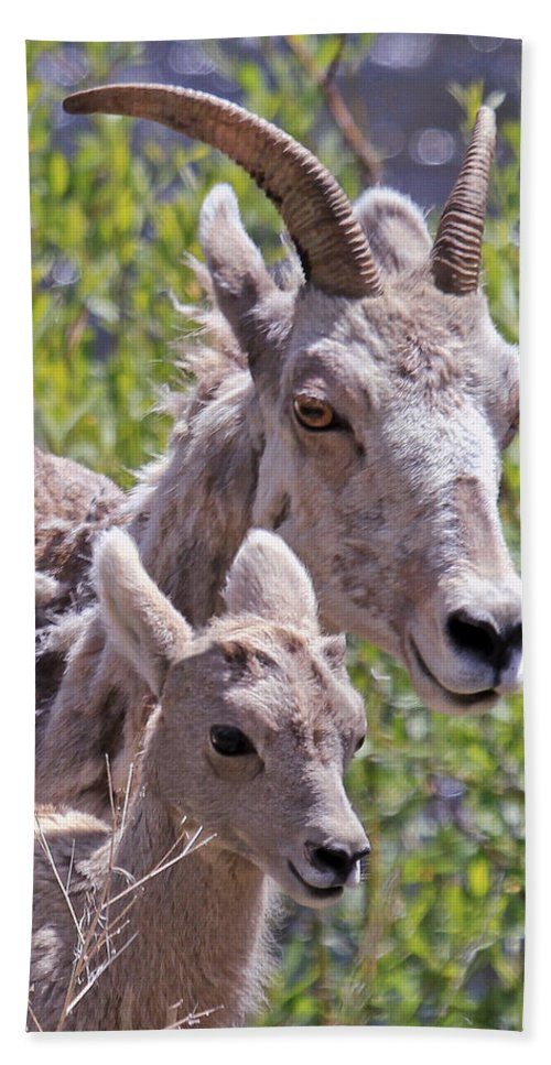 Bighorn Sheep Hand Towel featuring the photograph Momma And Baby Ram by Athena Mckinzie