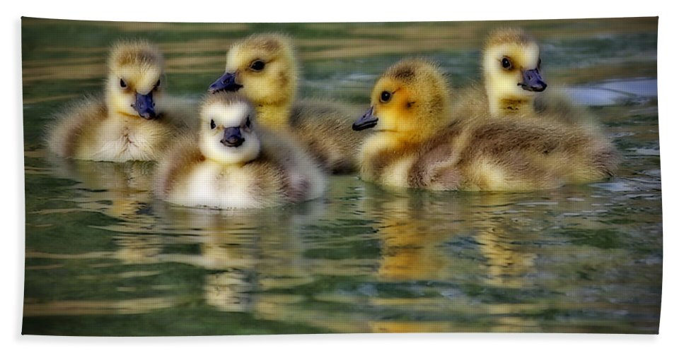 Baby Ducks Hand Towel featuring the photograph Momma's Little Gooslings by Elizabeth Winter
