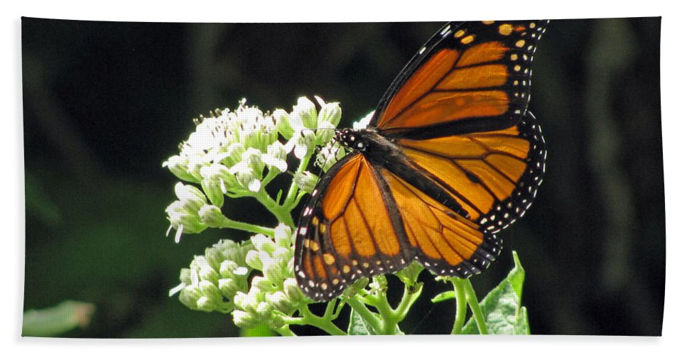 Butterfly Bath Sheet featuring the photograph Monarch Butterfly 59 by Pamela Critchlow
