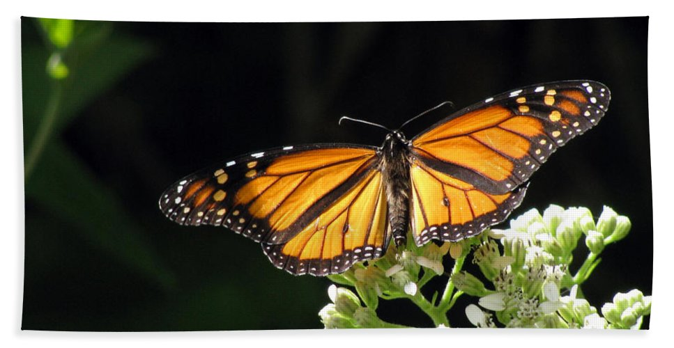 Butterfly Bath Sheet featuring the photograph Monarch Butterfly 61 by Pamela Critchlow