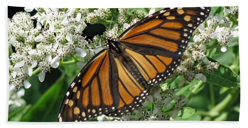Butterfly Bath Sheet featuring the photograph Monarch Butterfly 62 by Pamela Critchlow